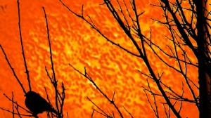 Bird-In-A-Tree-640x360
