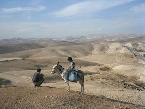herder-goats-jerusalem_32755_990x742