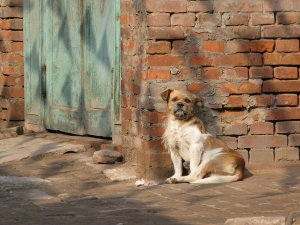 3212514-Stray-Dog-in-Pingyao-0